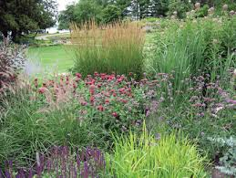 landscaping grasses design home ideas pictures homecolors
