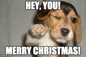 Christmas Doge Meme - unique doge meme christmas kayak wallpaper