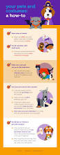 halloween safety tips halloween pet safety tips and pet costume advice animal bliss