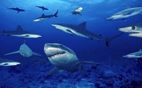 vasche acquario acquario di genova in hd vasca degli squali 3 8 2015