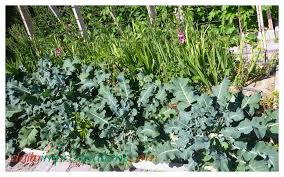 flowers for vegetable garden 10 ideas for vegetable gardening in small spaces