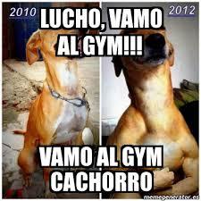 Memes De Gym En Espa Ol - meme personalizado lucho vamo al gym vamo al gym cachorro