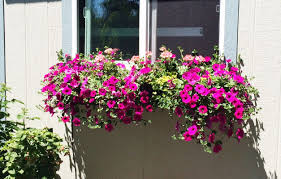 What To Plant In Window Flower Boxes - step by step guide to planting a window box