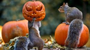 download wallpaper 3840x2160 halloween squirrels pumpkin mask
