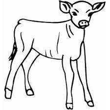little calf farm animal coloring pages animal coloring pages of