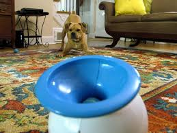 urban dog ring holder images I want that diy jpeg