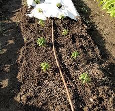 smart watering in the vegetable garden msu extension