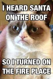 Unhappy Cat Meme - 1219 best grumpy cat yeah images on pinterest funny kitties