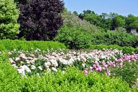 the first garden tours of the season the martha stewart blog