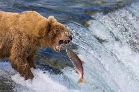 Alaska Wildlife images Alaska wildlife photo gallery alaska photography blog patrick jpg