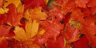 Best Color With Orange 8 Best Fall Paint Colors How To Decorate With Fall Colors