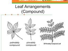 plant anatomy u0026 physiology