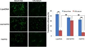 ijms free full text dual targeting biomimetic liposomes for