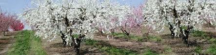 Best Fruit Trees For North Carolina - welcome to dave wilson nursery dave wilson nursery