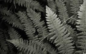 wallpaper ferns harder better faster stronger