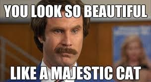 You Are Beautiful Meme - love you meme have a good day meme funny love meme gm memes