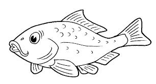 color fish misterbug deviantart