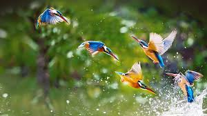 birds images Birds nature water free photo on pixabay jpg