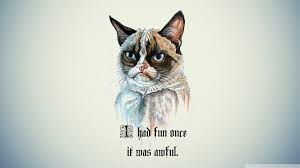 Grumpy Cat Meme I Had Fun Once - i had fun once it was awful cat 4k hd desktop wallpaper for 4k