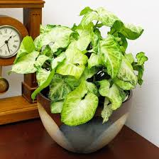 houseplants part two u2013 achieve true health
