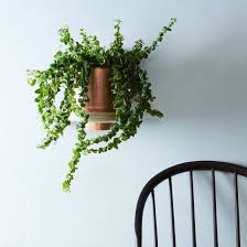 spun planter u0026 wall mount on food52