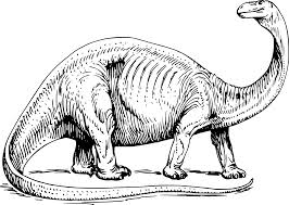 dinosaur skeleton outline clipart panda free clipart images