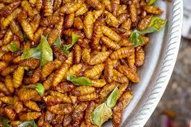 insectes dans la cuisine mangera t on des insectes en 2050 up le mag