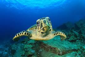 scuba diving malaysia dive sipadan labuan tioman layang layang