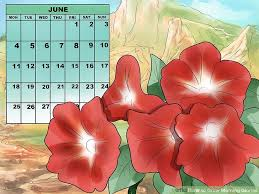 Morning Glory Climbing Plant - how to grow morning glories with pictures wikihow