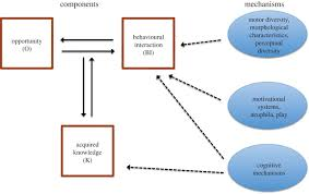 from mechanisms to function an integrated framework of animal