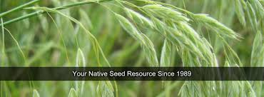 mn native plants quality native seed custom seed mixes local ecotype midwest