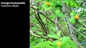 british native plants the delicate balance some of bc u0027s beautiful native plants and