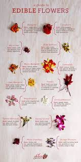 fun recipes to make your own food coloring edible flowers