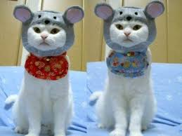 Kitten Halloween Costumes Pet 54 Cats Costumes Images Cats Costumes