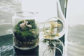 how to plant your terrariums malaysia food u0026 travel