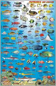 Sea Of Japan Map Okinawa Japan Dive Map U0026 Reef Creatures Guide Franko Maps