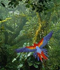 25 tropical birds ideas tropical animals