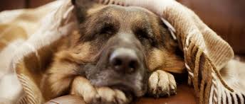 pet euthanasia what is the difference between pet euthansia at home or at the vet