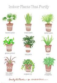 today i u0027m sharing a succulent plant guide to help you add