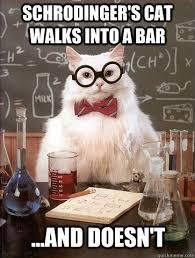 Success Cat Meme - physics buzz a scientific analysis of meme success