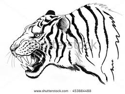 photos how to sketch a tiger drawing art gallery