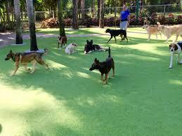 Fake Grass Outdoor Rug Dog Grass Huntington Park California Los Angeles County