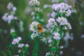 butterfly on flower ii free stock photo