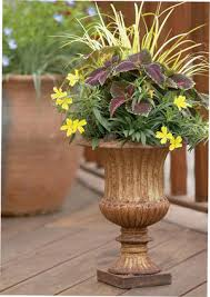 Plant Combination Ideas For Container Gardens Drops Of Jupiter Is A And Bright Plant Combination From