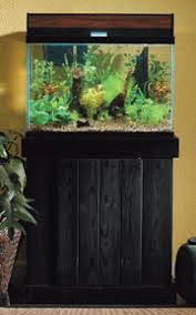 Live Plants In Community Aquariums by Step By Step Guide To Setting Up A Planted Aquarium