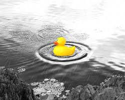 Yellow And Gray Bathroom Decor by Yellow Rubber Duck Photo Art Print Home Wall Bathroom Decor