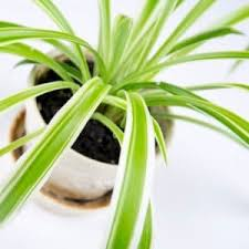 tips to care for indoor plants in the cold winter angie u0027s list