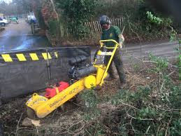 tree stump planters tree stump removal specialist reliable tree surgeon in local