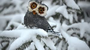 white owl 2 wallpapers types of owls hd wallpaper animals wallpapers