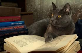 To Kill A Mockingbird Cat Meme - 12 cats who are serious about reading